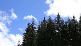 Trees with clouds moving in the background. Fast moving clouds behind the trees stock footage