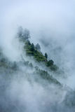 Trees in clouds. Peacful serene scenery - mountain forest trees in clouds in Himalayas. Kullu valley, Himachal Pradesh, India stock photography