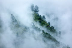 Trees in clouds Stock Images