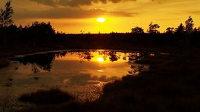 Orange sunset on the swamp Stock Photography
