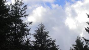 Trees and clouds in the wind. Trees and clouds blowing in the wind stock footage