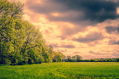 Trees in a cloudy landscape Stock Photography