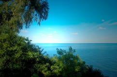 Trees at the coast Royalty Free Stock Photo