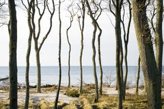Trees by coastline. Scenic view of bare trunks of trees on coastline with sea in background Stock Photo