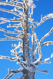 Trees coated with snow Stock Photo