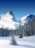 Trees coated with snow and high snowy mountains Royalty Free Stock Photo