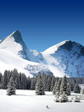 Trees coated with snow and high snowy mountains Royalty Free Stock Images