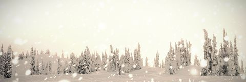 Trees coated of snow. In winter Stock Images