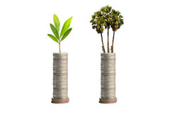 Trees on coins Royalty Free Stock Photo