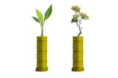 Trees on coins Stock Photos