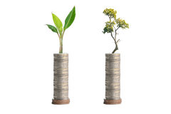 Trees on coins Royalty Free Stock Images
