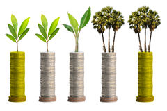 Trees on coins Royalty Free Stock Photos