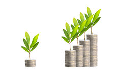 Trees on coins Stock Photo