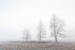 Trees in a cold foggy winter grassland landscape Stock Image
