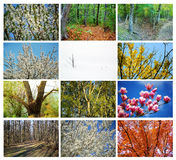 Trees collage. Collage of trees from different seasons Stock Photo