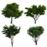Trees Collection. Collection of deciduous trees and fruit trees, 3D rendering Stock Image