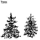 Trees collection. Ink Fir silhouettes Royalty Free Stock Photography