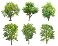 Trees Collection isolated on white background Royalty Free Stock Images