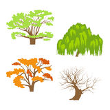 Trees collection. Set of silhouettes of trees. Deciduous trees in different seasons - autumn, winter, summer, spring. Silhouettes of trees with leaves and stem Stock Photos