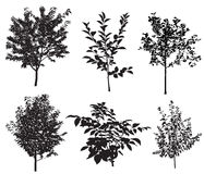 Trees. Collection of silhouettes of garden trees. Vector Stock Photos