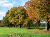 Trees with colored autumn leaves on the countyside. alley stock photo
