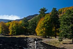 Trees with colorful autumn leaves at the foot of Etna volcano Royalty Free Stock Image
