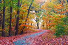 Trees in colorful foliage along a park pathway. Royalty Free Stock Photos
