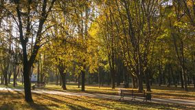 Trees with colorful foliage in the autumn park with benches royalty free stock photography