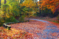 Trees in colorful foliage in the park. Stock Photo