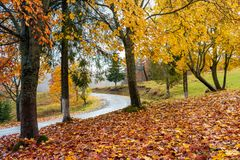 Trees in colorful foliage by the road. Lovely countryside scenery in autumn royalty free stock image