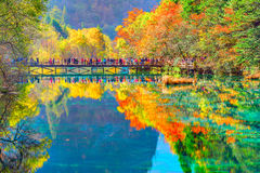 Trees by colorful lake at autumn day time. Stock Photography