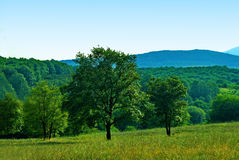 Trees. Colorful landscape tree in clear green and blue nature Royalty Free Stock Images