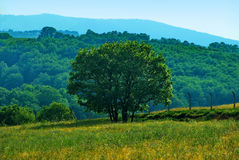 Trees. Colorful landscape tree in clear green and blue nature Royalty Free Stock Photo