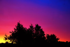 Trees at colorful sunrise Royalty Free Stock Photos