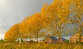 Trees with colorful  yellow autumn leaves Stock Photo