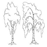 Trees coloring book. Birch  outline. Isolated Stock Photo