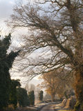 Trees and country lane in autumn Royalty Free Stock Photos
