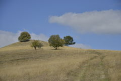 Trees and country road over hill in early autumn Royalty Free Stock Images