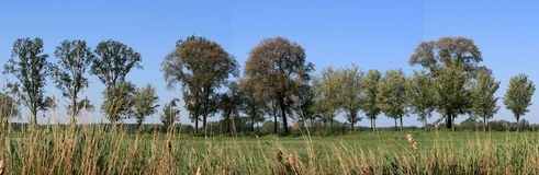 Trees in countryside. Panoramic view of trees in countryside with blue sky background Royalty Free Stock Photography