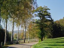 Trees countryside landscape birchs stock image