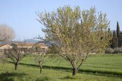 Trees in Countryside, Lourmarin, Provence. Trees in Countryside in Lourmarin, Provence, France, Europe Royalty Free Stock Photo