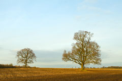 Trees in a countryside scene at sunset Stock Image