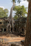 Trees in courtyard, Angkor Wat Temple, Cambodia Stock Photos