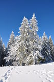 Trees covered with christmas snow. Snow covered forests of fir trees in mid winter. Above it there's a clear blue sky. Christmas is here Stock Photography