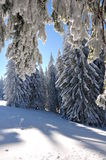 Trees covered with christmas snow. Snow covered forests of fir trees in mid winter. Above it there's a clear blue sky. Christmas is here Stock Image