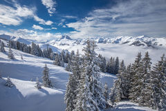 Trees covered by fresh snow in Alpine mountains - Austria from K Stock Images