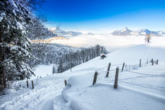 Trees covered by fresh snow in Alps. Stunning winter landscape. Stock Photography