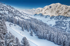 Trees covered by fresh snow in Austria Alps - Zillertal arena, A Stock Photography