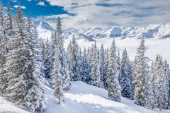 Trees covered by fresh snow in Kitzbuhel ski resort, Tyrolian Alps, Austria Royalty Free Stock Photos