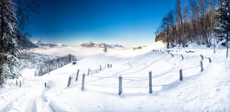 Trees covered by fresh snow in Swiss Alps. Stunning winter landscape. Trees covered by fresh snow in Swiss Alps with stunning winter landscape, Schwyz Royalty Free Stock Photography